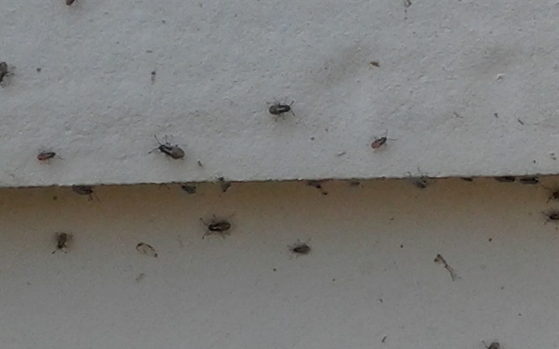 Small Grey Bugs In House Architectural Designs