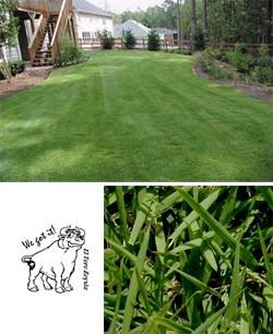 El Toro Zoysia Grass Overview