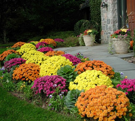 Fall Blooming Perennial Plants For The South